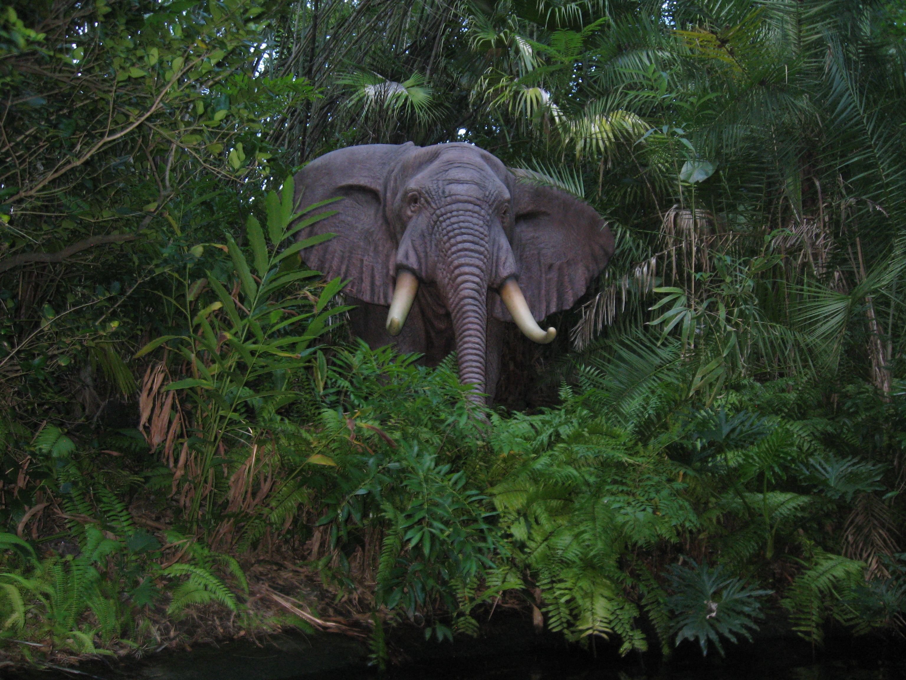 Real Jungle Animals Pictures to Pin on Pinterest - PinsDaddy